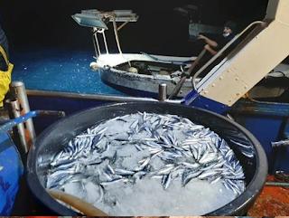 Il Distretto della Pesca e Crescita Blu di Mazara sta sperimentando con successo un nuovo tipo di ghiaccio  per una migliore conservazione del pescato