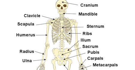 General Knowledge Quiz Questions with Answers - About The Bones