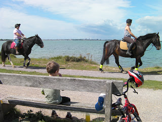 hayling billy line and bridleway with horses