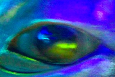 whale eye photo©Alan Summers