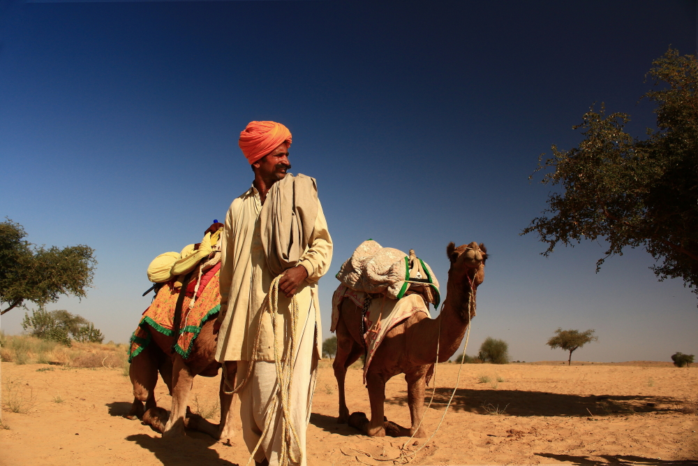 Man with turban standing next to his camels