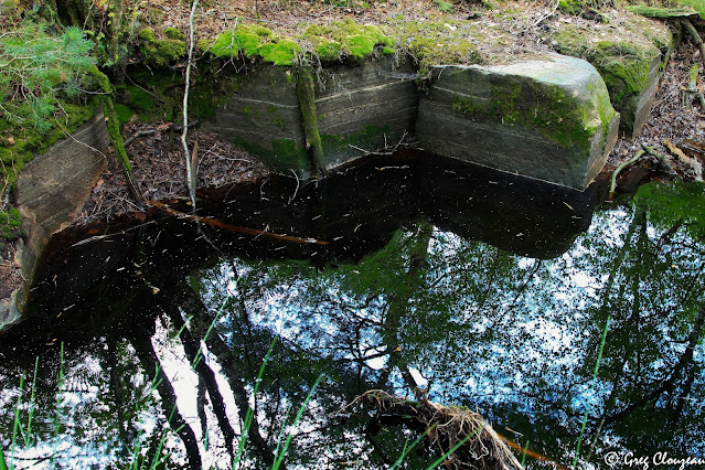 Mare Collinet, Forêt de Fontainebleau