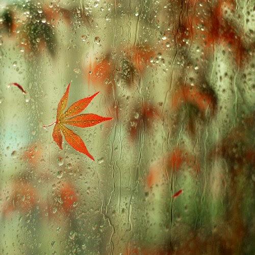صور جميلة للمطر فى فصل winter-rain+(5).jpg