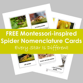 FREE Montessori-inspired Spider Nomenclature Cards