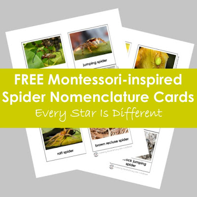 FREE Montessori-inspired Spider Nomenclature Cards