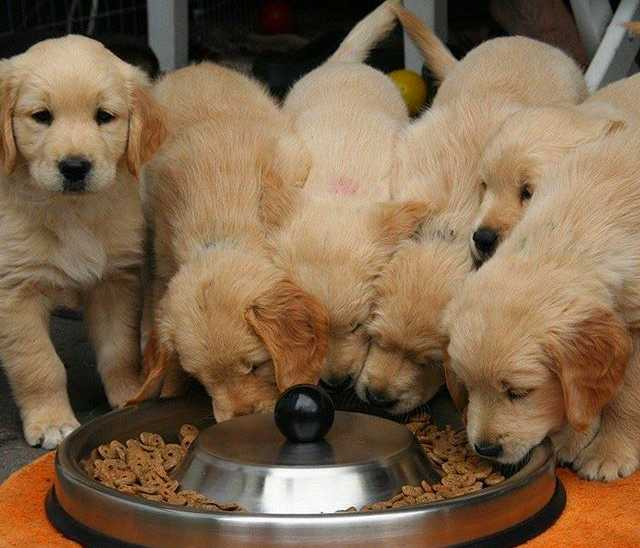 Dog Food Is Withdrawn Due to Potentially Harmful Levels of Vitamin D