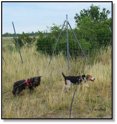 mit zwei Hunden unterwegs