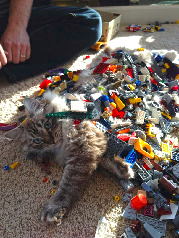 "6. ""My 5-Year-Old Son Is Getting Good At Legos. He Built A Cat"""