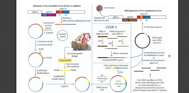 Li-Meng Yan Beri Bukti Virus Corona Dari Lab Wuhan Dan China Berusaha Tutupi Identitas Aslinya