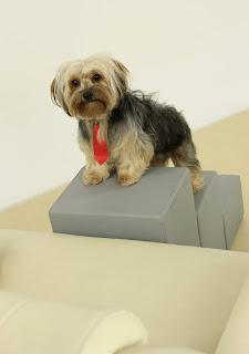 escadas veterinárias para cães