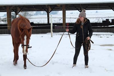 Longues rênes ou longe, ce type de travail à pied est parfait pour débuter avec son cheval.