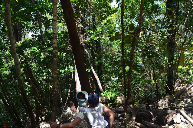 Wayag, Raja Ampat - menuruni hutan kars Ⓒjelajahsuwanto