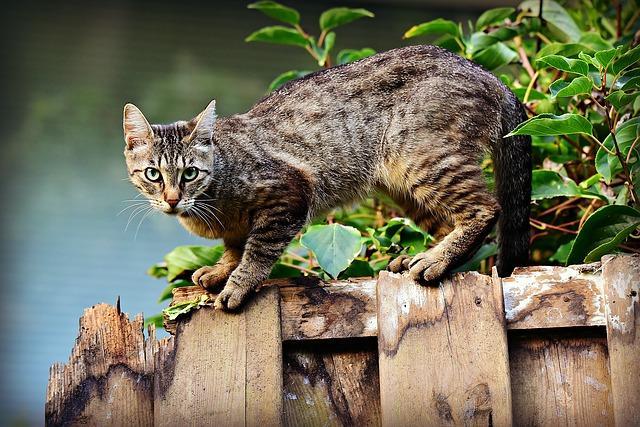 Cara-Mengusir-Kucing-Liar-di-Rumah-Agar-Tak-Kembali-Lagi