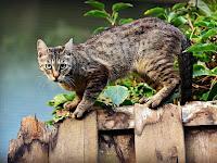Cara Mengusir Kucing Liar di Rumah Agar Tak Kembali Lagi