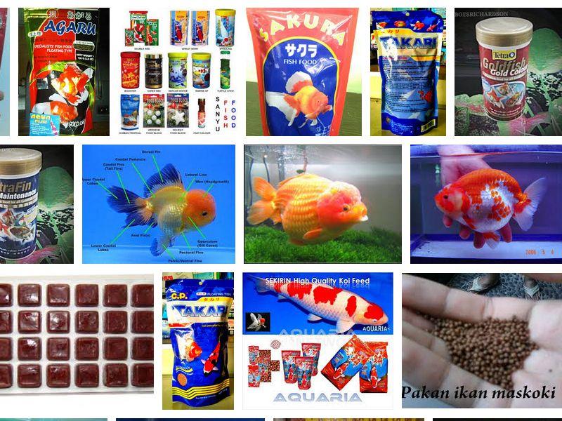 Makanan Ikan Mas Koki Agar Cepat Besar Selain Pelet