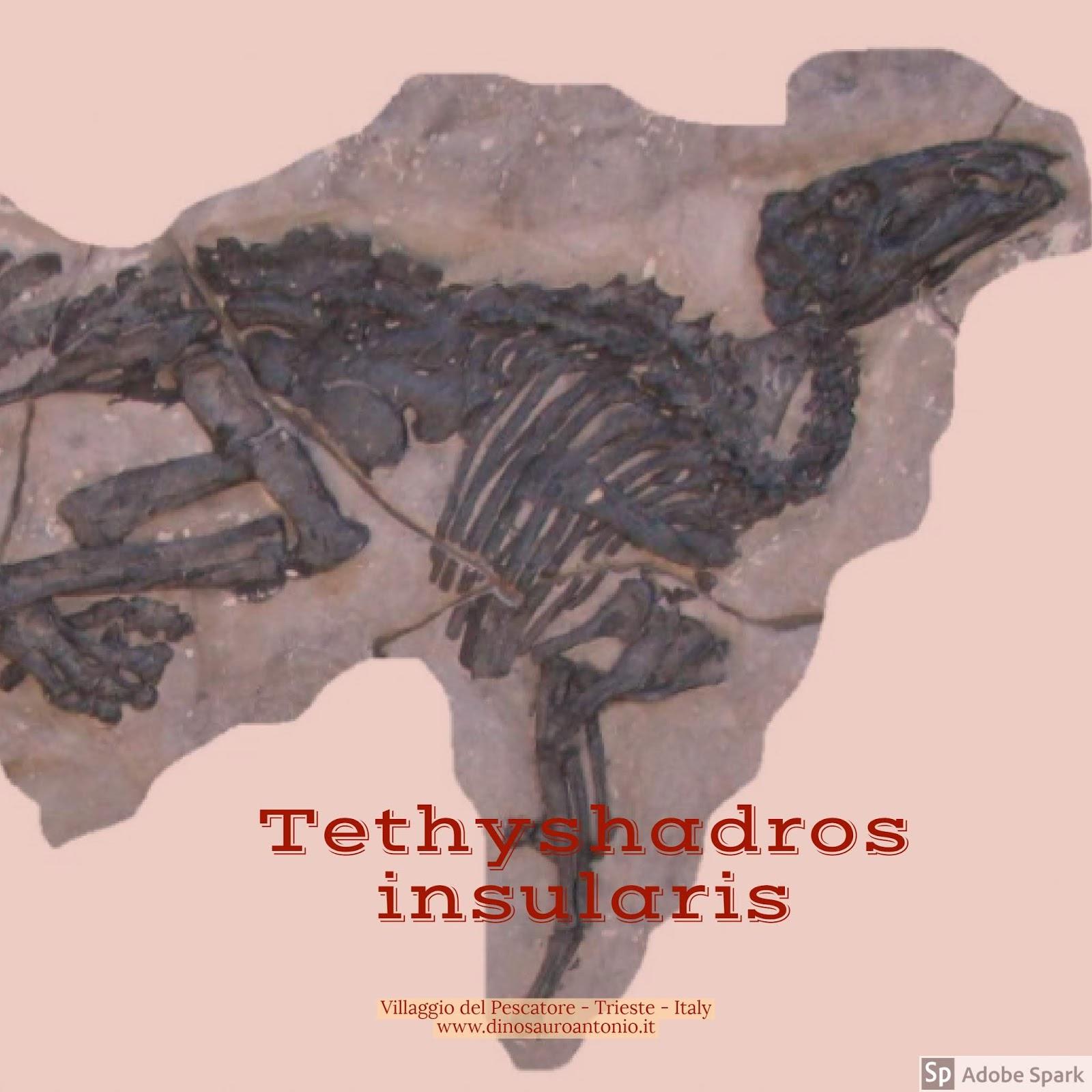 Attività di dating relativo fossile