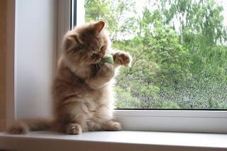 lucunya kucing diajak bermain