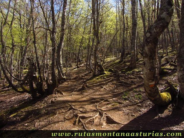 Sendero entre el bosque del Llanu'l Toru