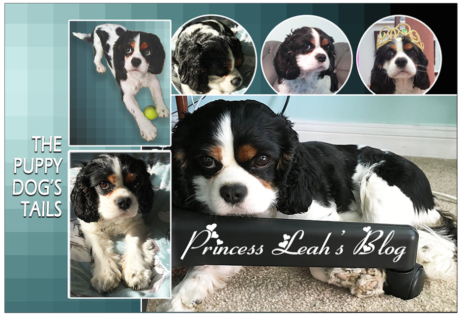 Princess Leah's Blog