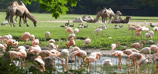 Tierpark Berlin em Berlim