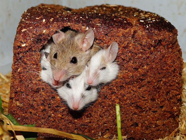 Signs You Need Pest Control Services