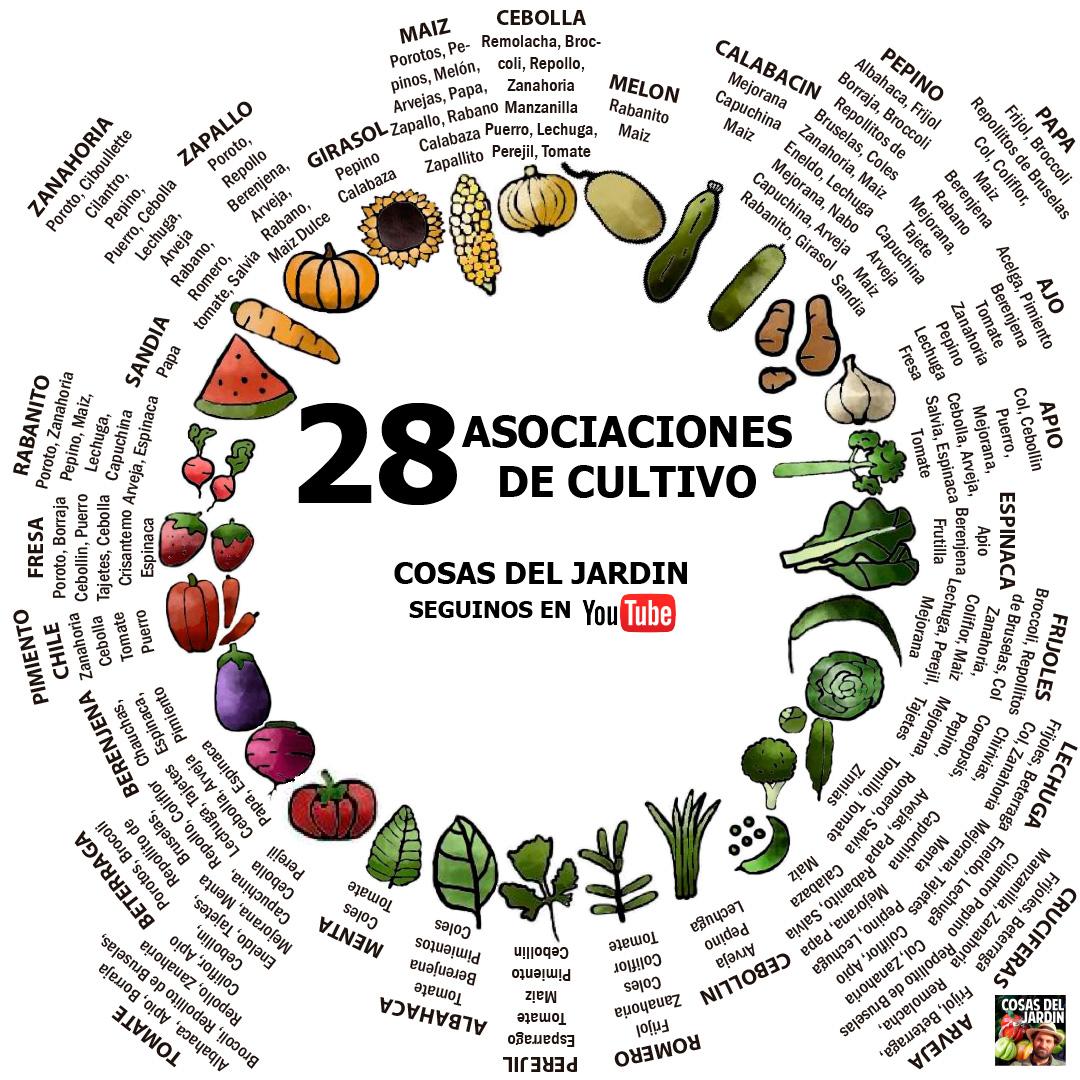 C mo es la asociaci n de cultivos son 3 trucos y for Que son cultivos asociados