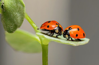 Ladybugs seeping from their knees
