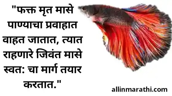 Motivational quotes marathi