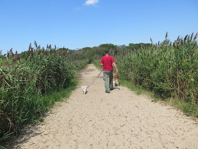 Beautiful walking path down from the park to the beach area at Gardiner County Park and Beach