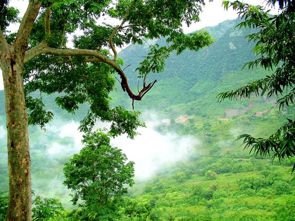 Rain Fall Hd Wallpapers Vizag Araku Valley Tourist Information Hi Vizag