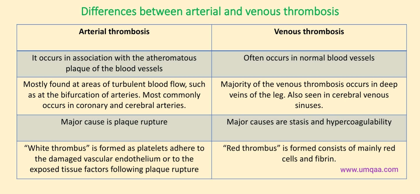 Differences between arterial and venous thrombosis