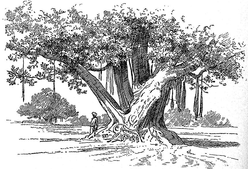 an AH Hallam Murray book illustration, exotic tree
