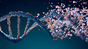 El genoma puede variar entre individuos