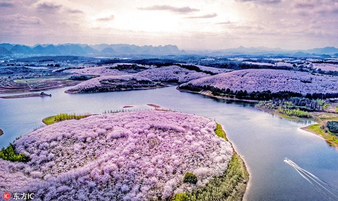 Hòn đảo hoa anh đào 'đẹp rụng rời' ở Trung Quốc - Ảnh 2