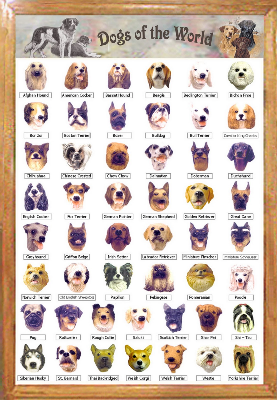All Types Of Dogs In The World List