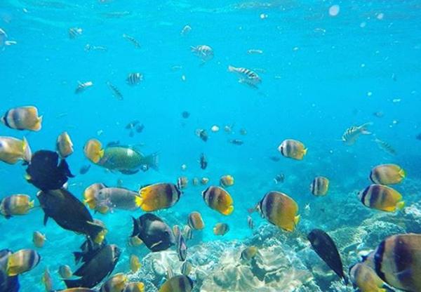 Keindahan Laut Peninda Bali