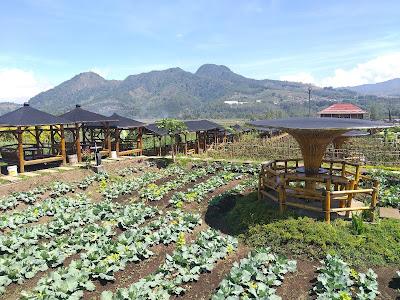 Cafe Sawah Pujon Kidul Sebagai Alternatif Ngopi di Alam Terbuka