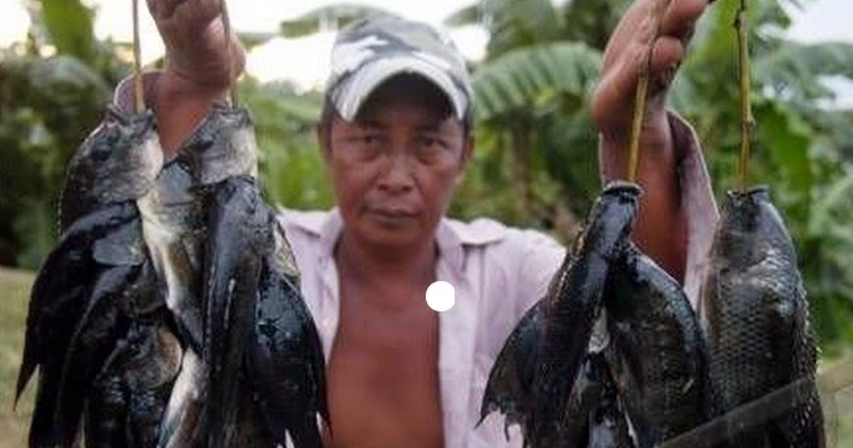 6 Resep Rahasia Umpan Ikan Mujair Yang Sobat Harus Coba Resep Umpan Ikan