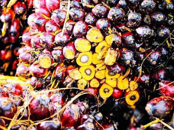 Palmöl - Wo ich es gefunden habe und wie ich es ersetzt habe