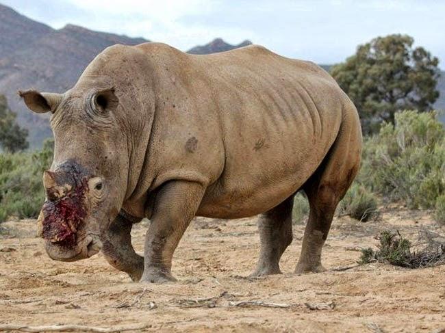 A Fauna do Planeta Morre aos Poucos