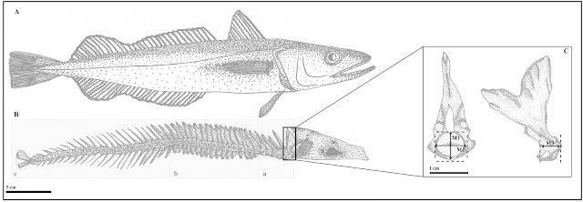 Tierra del Fuego: marine ecosystems from 6,000 to 500 years ago