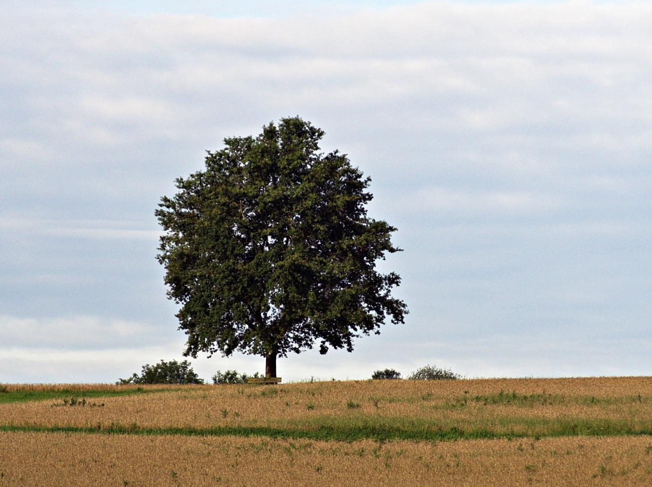 Jedes mal anders, der Solitärreferenzbaum