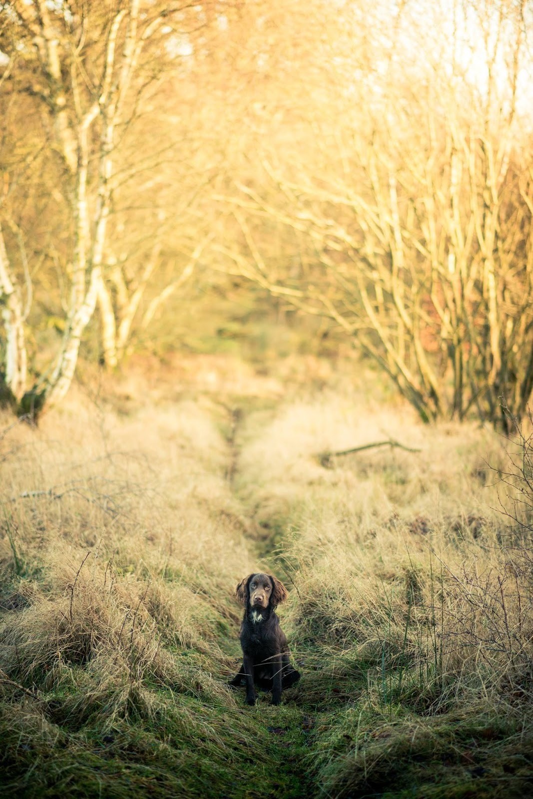 tilly cocker spaniel winter photo shoot liquidgrain liquid grain puppy