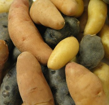 Fingerling Potatoes - Melissa's Tubers