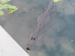 Everglades Boardwalk Water Florida