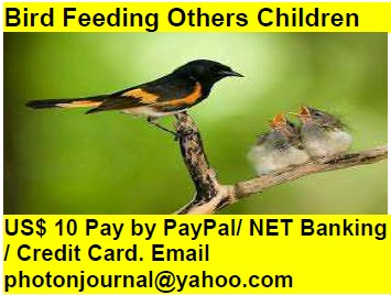 Bird Feeding Others Children bird story book