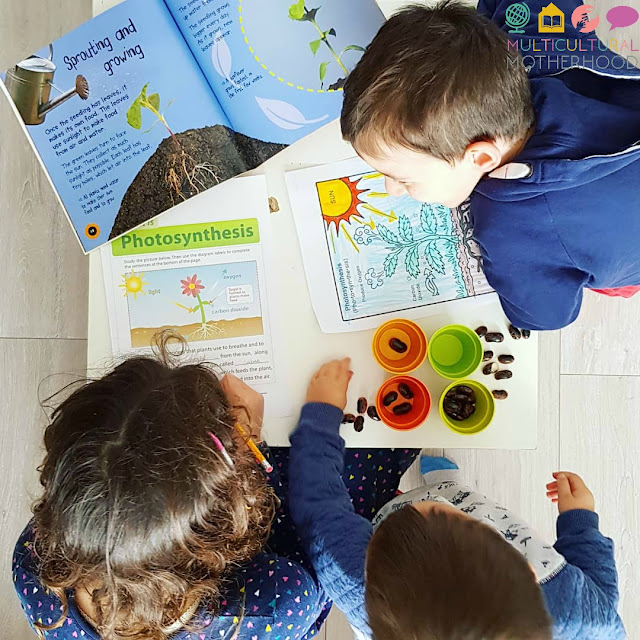 Which Language Should I Homeschool in?