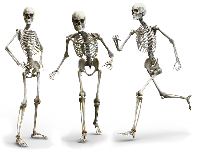 Skeleton, body movements, class 6 science, ncert class 6 science