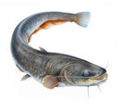 Cara Paling Mudah Budidaya Ikan Lele Di Kolam Terpal Hasil Jutaan Rupiah