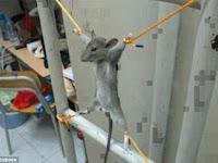 Seorang Pria Menghukum Tikus Karena Merusak Uangnya